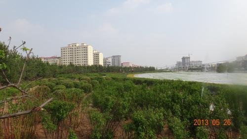 榆林大道绿化工程